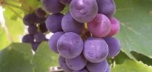 Soyons de bonnes françaises : appellationvin.fr