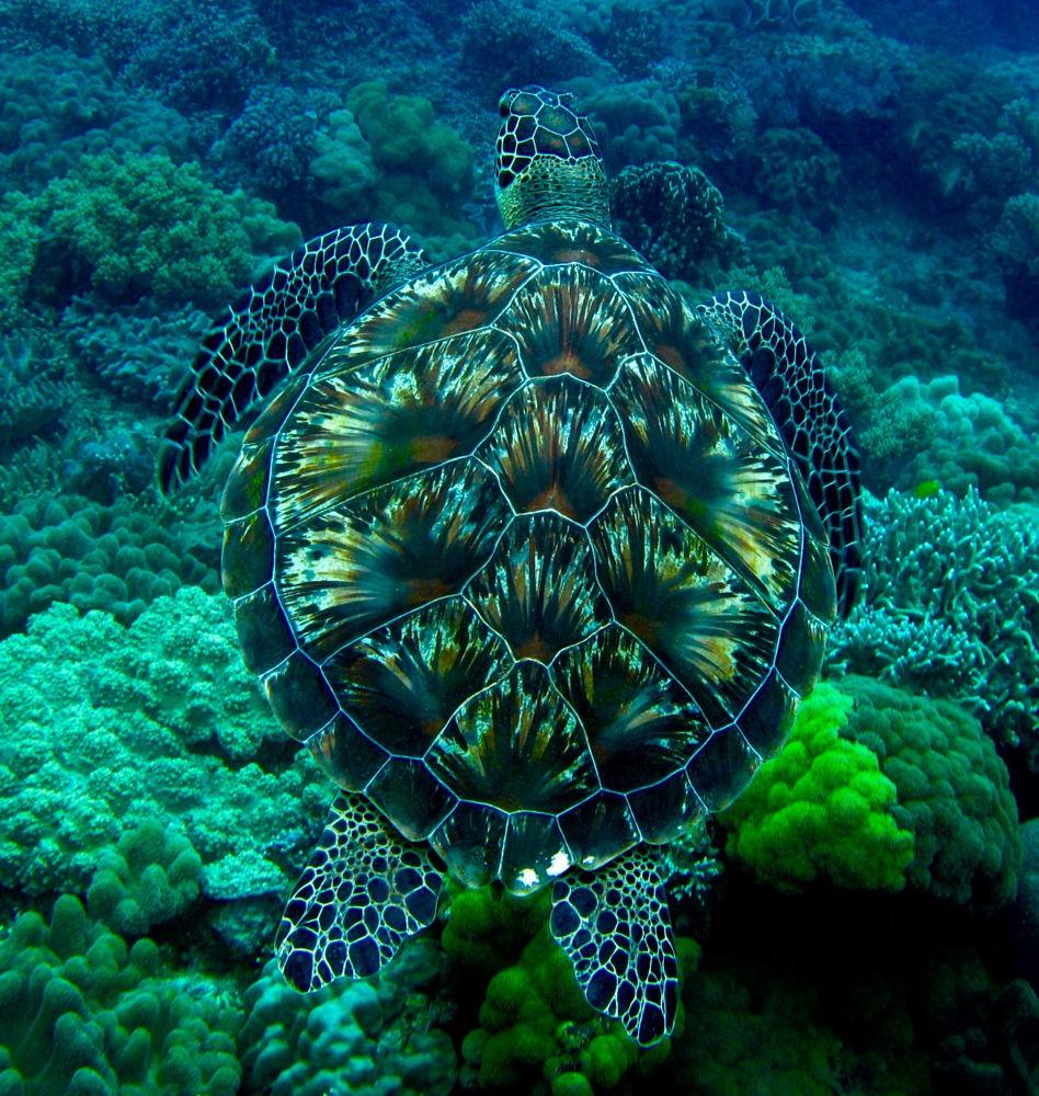 Les petits soins apportés aux tortue d'eau